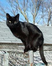 275px-Blackcat-Lilith