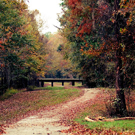 Walking Path by April Lewis - City,  Street & Park  Neighborhoods ( fall, path, leaves )