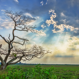 My World by KIN WAH WONG - Landscapes Sunsets & Sunrises ( old tree, new life, my life, my world, scenery, scenic, landscapes, landscape, dead tree )