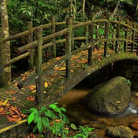 Kuala Dibang by KIN WAH WONG - Landscapes Travel ( public park, jungle, kuala dibang, stone, forest, malaysia, travel, bridge, scenery, morning, landscape, perak )