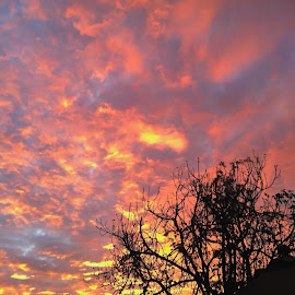 Todays' Sunrise by Jim Downey - Instagram & Mobile iPhone ( mobile today, colors, fig tree, red sky in the morning, sunrise )