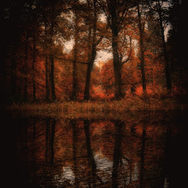 Autumn reflection  by Kelly Murdoch - Nature Up Close Trees & Bushes ( water, seasons, autumn, ripples, orhange, reflections, trees, leaves, shadows, ztam, fall, color, colorful, nature )