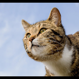 by Eskil Berget - Animals - Cats Portraits