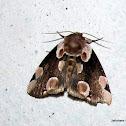 Geometridae (Ennominae)