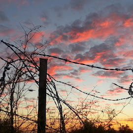 Wired by Cheryl Petretti - Landscapes Cloud Formations ( in the pink, barbed wire, wired, country,  )