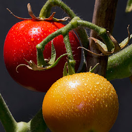 Two wet tomatoes by Deon Van den Heever - Nature Up Close Gardens & Produce