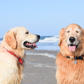 by Theresa Rasmussen - Animals - Dogs Playing (  )