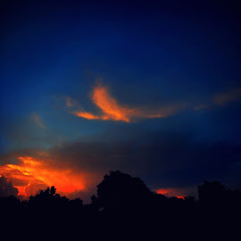 Where Eagles Dare To Soar by Vince Scaglione - Landscapes Weather ( clouds, sky, sunset, sundown, silhouettes, trees, weather, eagles, dusk )