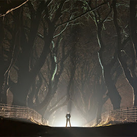 The Time Traveller by Brens Photo's - Landscapes Travel ( ireland, armoy, dark hedges, antrim )
