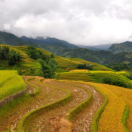 Harvest season in Sapa, Northern Vietnam by Ha Trinh - Landscapes Mountains & Hills ( sapa vacation, sapa holiday, sapa guide, sapa adventure, sapa travel )