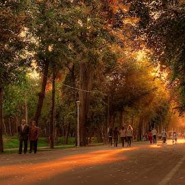 autumn in the park by Cornelius D - City,  Street & Park  City Parks