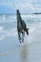 Screenshot of Horse images wallpaper