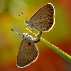 Because I Love You by Yustinus Andhi Wuryanto - Animals Insects & Spiders (  )