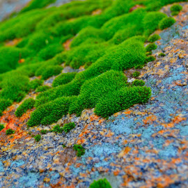 Nature by Renu Mudi - Nature Up Close Mushrooms & Fungi ( onrock, fungi, closeup )