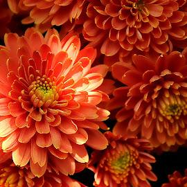 by Eni Zanic - Flowers Flower Gardens