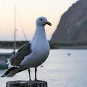 Gull and Heron