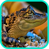 crocodile Wallpaper APK for Bluestacks