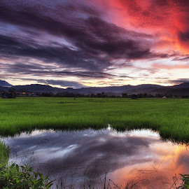 Paddy Field by BRYON PHILIP - Landscapes Prairies, Meadows & Fields ( field, red, paddy, green, cloud, sunrise )