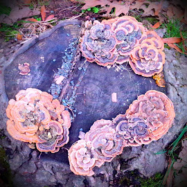 Can a Stump be Pretty? by Cecilia Sterling - Nature Up Close Mushrooms & Fungi