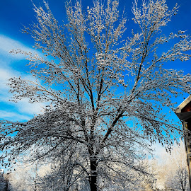 Awesome winter by Rajat Das - Nature Up Close Trees & Bushes ( minnesota, winter, nikon, rajat )