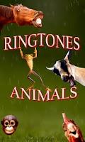 Screenshot of Animals Sounds & Ringtones