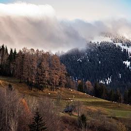The end of autumn, here comes Winter by Aleš Krivec - Landscapes Mountains & Hills ( clouds, orange, sky, autumn leaves, colorful, autumn, brown, autumn colors, road, leaf, leaves, autumn leaf )