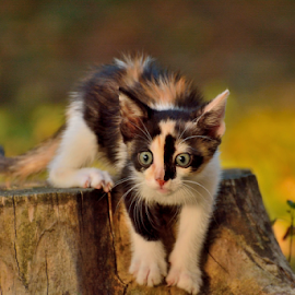 Chasing the sun by Ion Alexandra - Animals - Cats Kittens