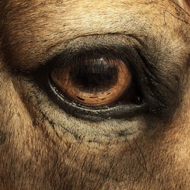 Window to the Soul by Lisa Matthews - Animals Horses