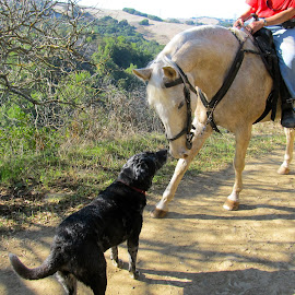 Meetin' and Greetin' by Kathleen Koehlmoos - Animals Horses ( horses, horses meeting dogs, trail riding, dogs and horses, horse-back riding, dogs meeting horses )