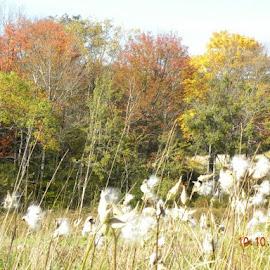 Fall by Sandy Kuen - Landscapes Prairies, Meadows & Fields