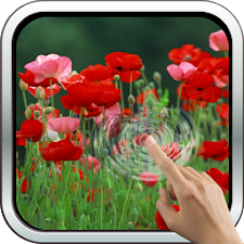 Red Poppies 3D Wallpaper