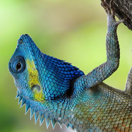 by Quydong Pham - Animals Reptiles