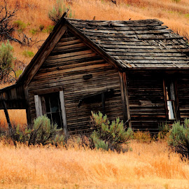 Witness by Gabriel Gutierrez - Buildings & Architecture Decaying & Abandoned ( ranch, old, wooden, arid, abandoned )