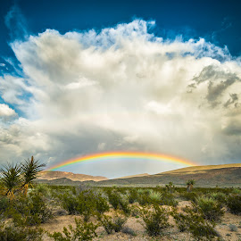 Desert Colors by Timothy Hess - Landscapes Deserts ( clouds, big bend, desert, thunderstorm, big bend national park, storm, rainbow )
