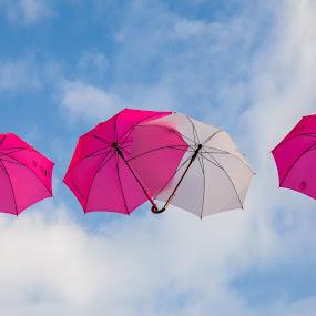 Umbrellas by Hans-Börje Jansson - City,  Street & Park  Vistas ( sweden, sky, umbrellas, lund, innocarneval, white, pink )