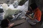 medvědovi už z toho hrabalo