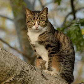 Cat on a tree by K.C. Chan - Animals - Cats Portraits ( hong kong, kitten, cat, tree, lovely,  )