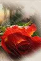 Screenshot of Red Rose Under Rain Live Wallp