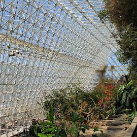Biosphere Greenhouse by Ken Miller - Buildings & Architecture Architectural Detail ( biosphere, arizona, lines, architectural detail, technical, architecture, design,  )