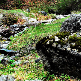 Spring is here by Claudiu Petrisor - Nature Up Close Rock & Stone ( water, source, bushes, grass, moss, trees, rocks )