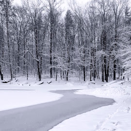 on frozen pond by Edward Kreis - Landscapes Weather ( march, black amd white, north laurel, mono., snow storm, maryland, snow day, scotts cove )