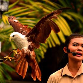 DSC_0235 bird show.jpg