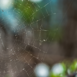 Spider Web by Jacquiline Van Ghent - Nature Up Close Webs ( broken, macro, green, small, spider web )