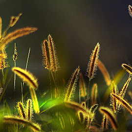 Summer Grass. by Dave  Horne - Nature Up Close Leaves & Grasses