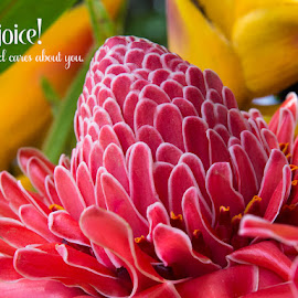 Rejoice! by Richard Duerksen - Typography Captioned Photos ( ginger, torch ginger, rejoice, dominican republic )