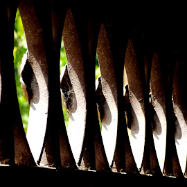 The Pattern by Ayan Mukherjee - Buildings & Architecture Architectural Detail
