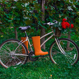 Grape Picker by Michael Wolfe - Transportation Bicycles ( grapes, basket, concord grapes, transportation, flowers, boots, grape farm, bicycle,  )