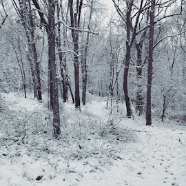 New York  by Trey Walker - Novices Only Landscapes ( snow, white, trees, new york, iphone )