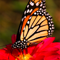 App Butterfly HD Collection apk for kindle fire