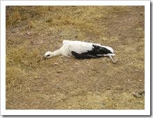 Uno de los animales reposa en el suelo, una vez rescatado.